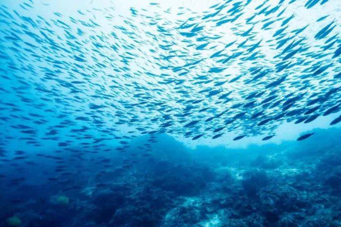 Το 50% των απορριμμάτων που ρυπαίνουν τις ελληνικές θάλασσες