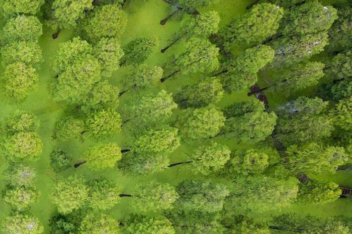 Οι επιστήμονες προειδοποιούν, ότι πλέον υπάρχει, όχι απλώς κλιματική αλλαγή, αλλά κλιματική επείγουσα ανάγκη